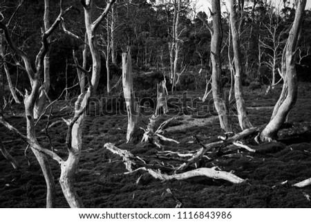 dead woodlands within cradle...