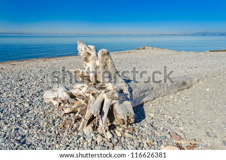 Deadwood, driftwood washed on to the beach.