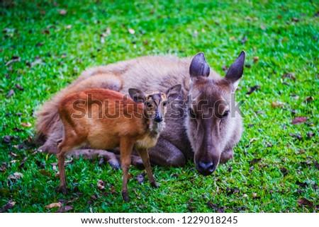 Dear and baby cute dear on the grass #1229018245