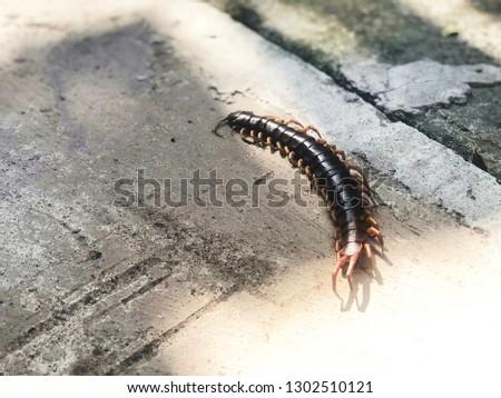 Death giant centipede #1302510121