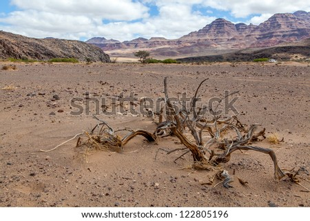 Death in the desert. Desolation and beauty of Damaraland in Namibia.