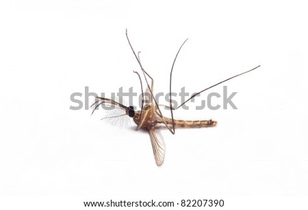 death of a mosquito on white background