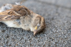 death small bird on ground after cat attack