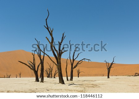 Death Vlei salt lake in Namibia