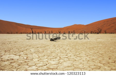 Death Vlei salt lake in Namibia with its cracked ground