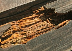 decayed rotten hole in an old board