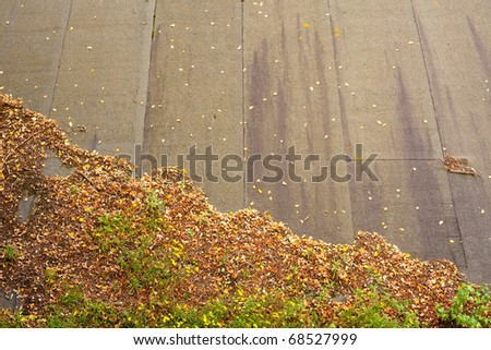 Decaying fall-colored leaves on tar paper roof show a decending  graph of decline.
