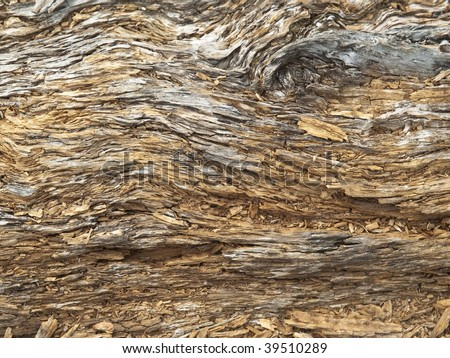 Decaying wood texture.