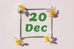 December 20th. Day of 20 month, calendar date. Frame from flowers of a narcissus on a light background, pattern. View from above. Summer month, day of the year concept.