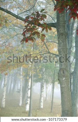 Decidous trees in autumn forest - Shutterstock ID 107173379