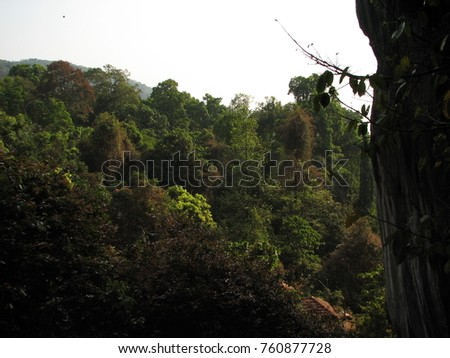 Deciduous and coniferous subtropical forest. #760877728