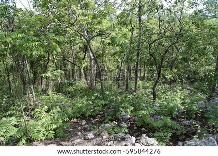 deciduous forest #595844276