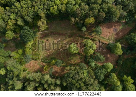 Deciduous forest clearing aerial photo