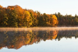 Deciduous forest in autumn colors with fog on the lake