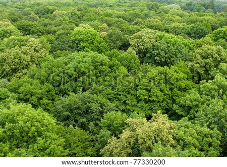 deciduous forest seen from above in summer