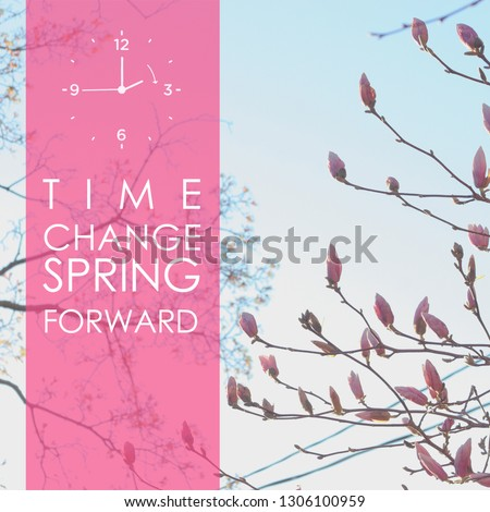 Deciduous magnolia tree with saucer tulip starting to bloom during spring against clear blue sky, spring time clock forward with text transparent pink screen on the left side. Instagram square size.