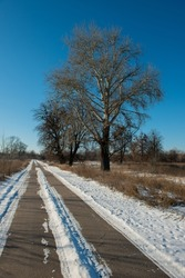 Deciduous trees and asphalt road covered with snow, landscape in the countryside. Winter season. Cover.
