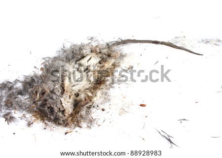 Field Mouse Life Cycle http://www.shutterstock.com/pic-88928983/stock-photo-decomposing-life-cycle-of-a-grey-field-mouse-mus-musculus-day.html