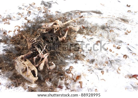 Field Mouse Life Cycle http://www.shutterstock.com/pic-88928995/stock-photo-decomposing-life-cycle-of-a-grey-field-mouse-mus-musculus-day.html