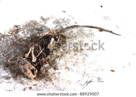 Field Mouse Life Cycle http://www.shutterstock.com/pic-88929007/stock-photo-decomposing-life-cycle-of-a-grey-field-mouse-mus-musculus-day.html