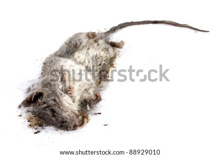 Field Mouse Life Cycle http://www.shutterstock.com/pic-88929010/stock-photo-decomposing-life-cycle-of-a-grey-field-mouse-mus-musculus-day.html