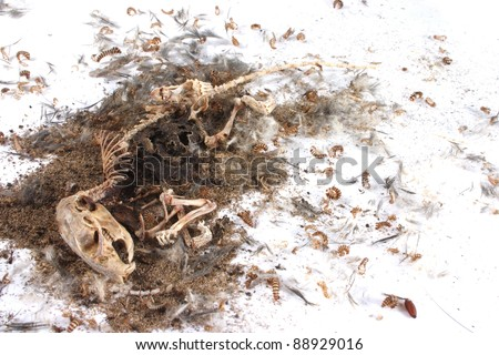 Field Mouse Life Cycle http://www.shutterstock.com/pic-88929016/stock-photo-decomposing-life-cycle-of-a-grey-field-mouse-mus-musculus-day.html