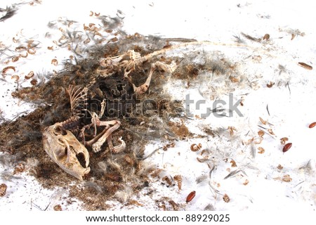 Field Mouse Life Cycle http://www.shutterstock.com/pic-88929025/stock-photo-decomposing-life-cycle-of-a-grey-field-mouse-mus-musculus-day.html