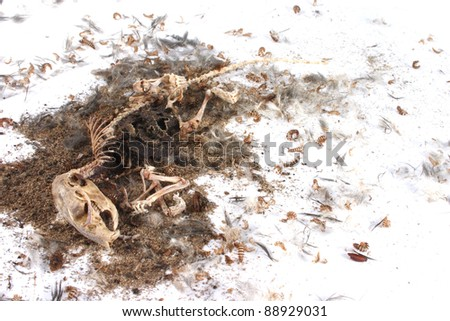 Field Mouse Life Cycle http://www.shutterstock.com/pic-88929031/stock-photo-decomposing-life-cycle-of-a-grey-field-mouse-mus-musculus-day.html