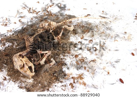 Field Mouse Life Cycle http://www.shutterstock.com/pic-88929040/stock-photo-decomposing-life-cycle-of-a-grey-field-mouse-mus-musculus-day.html