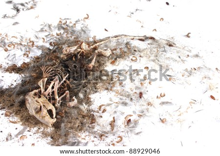 Field Mouse Life Cycle http://www.shutterstock.com/pic-88929046/stock-photo-decomposing-life-cycle-of-a-grey-field-mouse-mus-musculus-day.html