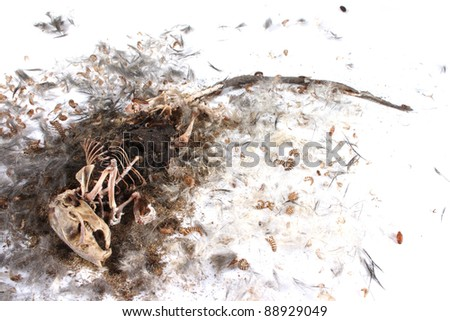 Field Mouse Life Cycle http://www.shutterstock.com/pic-88929049/stock-photo-decomposing-life-cycle-of-a-grey-field-mouse-mus-musculus-day.html