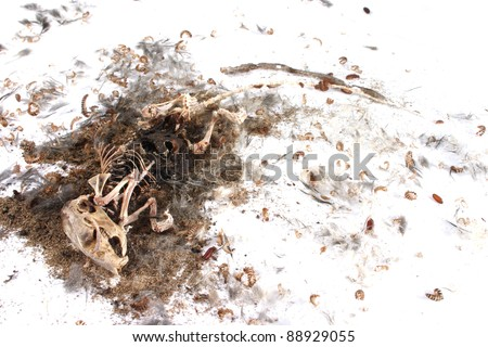 Field Mouse Life Cycle http://www.shutterstock.com/pic-88929055/stock-photo-decomposing-life-cycle-of-a-grey-field-mouse-mus-musculus-day.html