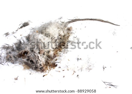 Field Mouse Life Cycle http://www.shutterstock.com/pic-88929058/stock-photo-decomposing-life-cycle-of-a-grey-field-mouse-mus-musculus-day.html