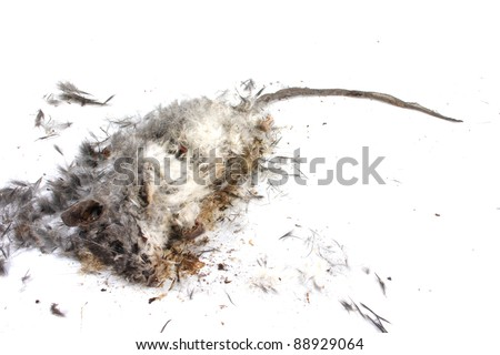 Field Mouse Life Cycle http://www.shutterstock.com/pic-88929064/stock-photo-decomposing-life-cycle-of-a-grey-field-mouse-mus-musculus-day.html