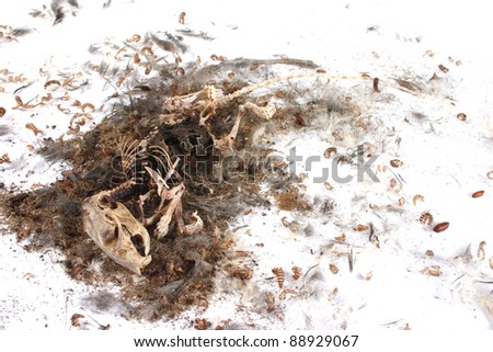 Field Mouse Life Cycle http://www.shutterstock.com/pic-88929067/stock-photo-decomposing-life-cycle-of-a-grey-field-mouse-mus-musculus-day.html