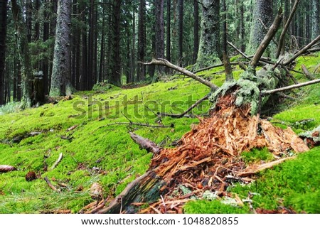 decomposing wood in the woods, wet moss in sunshine, summer day