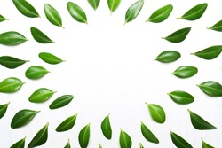 decor from green leaves on a white background, top view, flat