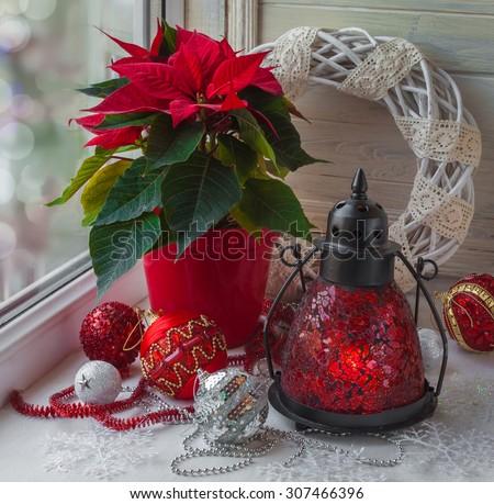 Decor winter window on the eve of Advent with Christmas star  (Euphorbia pulcherrima)