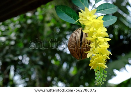 Decorate beautiful garden with yellow orchid with blur background. #562988872