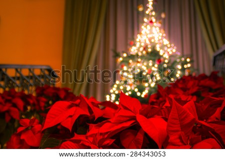 Decorated christmas tree with christmas lights on the stairs and poinsettia plants in front