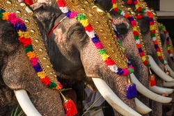 Decorated elephants at annual temple festival in Siva temple in Ernakulam, Kerala state, India