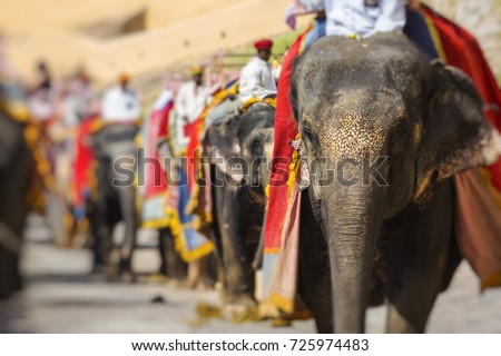 Decorated elephants in Jaleb Chowk in Amber Fort in Jaipur, India. Elephant rides are popular tourist attraction in Amber Fort. #725974483