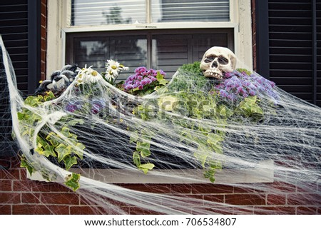 decorated window for Halloween. Spider web, skull, spiders on the flowers outside the window. Halloween decorations