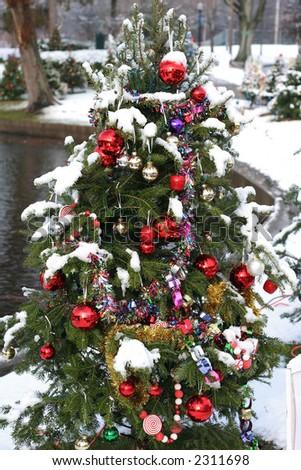 decorated xmas tree outdoors