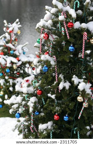 decorated xmas trees outdoors