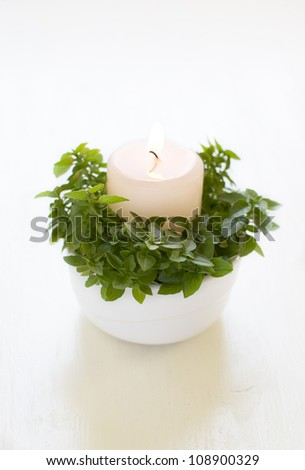 decoration candle with fresh basil leaves