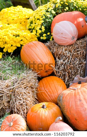 Decoration of fresh different pumpkin flowers and straw for thanksgiving or halloween