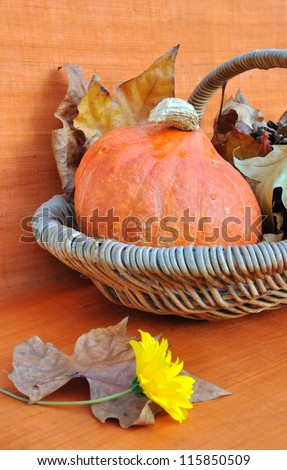 decoration on orange background with a pumpkin in a basket and a daisy flower