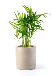 Decoration plant on concrete pot isolated on whitebackground