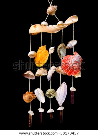 Decoration with many different seashells and snails on a black background.